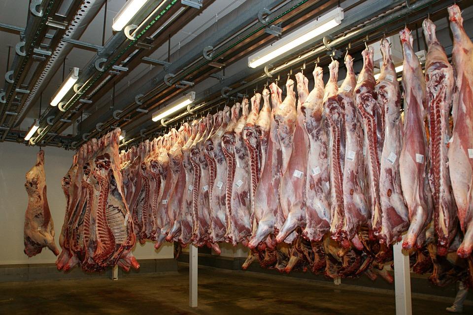 Aufgehängte Rinderhälften in einem Schlachtbetrieb www.piraten-nds.de