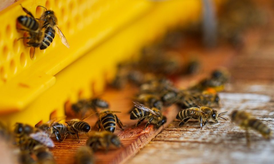 Eingang eines Bienenstocks